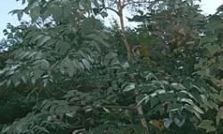 Польза лаванды: ароматное лекарство от 100 болезней