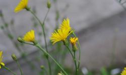 Сосновая пыльца – супер продукт!