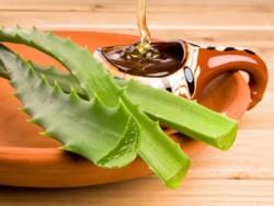 Алоэ с медом: лечебные свойства и противопоказания
