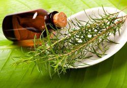 Масло чайного дерева: полезные свойства и противопоказания